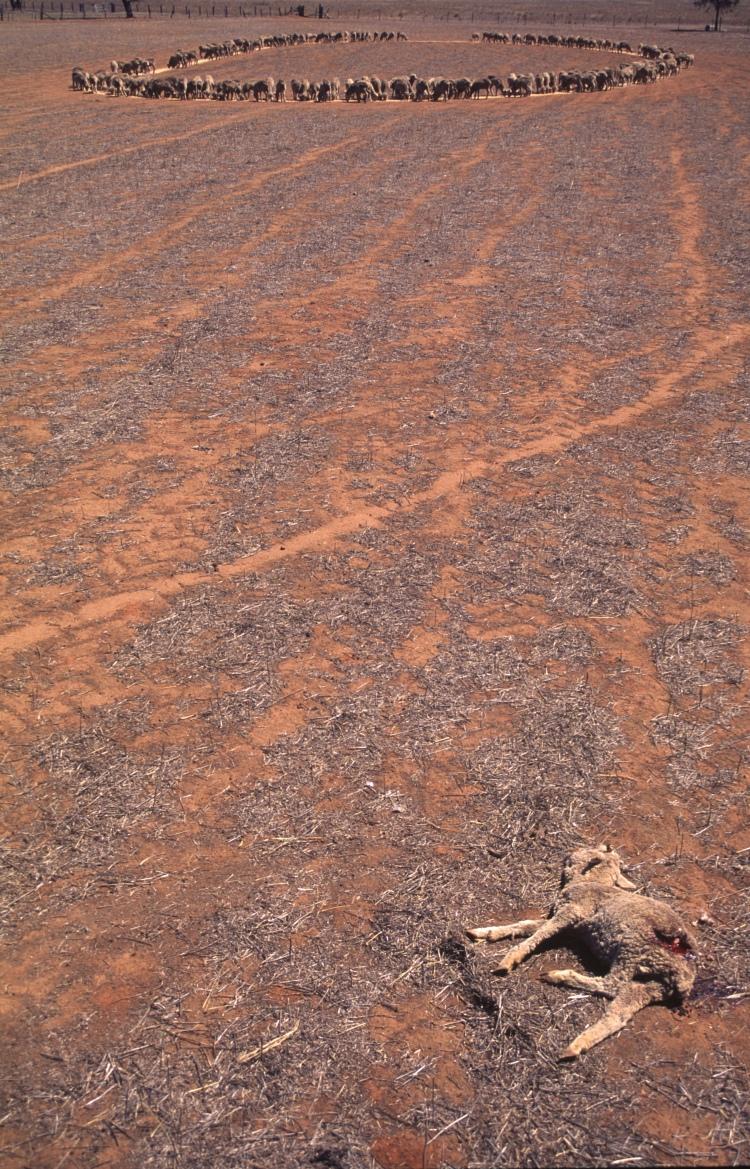 Drought 1 v